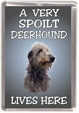 """Deerhound Dog Fridge Magnet """"A VERY SPOILT ..... LIVES HERE"""" by Starprint"""