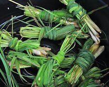 25 Samen Ostind Zitronengras - Zitronenduft/-arom-Cymbopogon flexuosus-z. Kochen