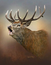 Limited Edition of 50 Red Deer Stag Prints by Robert J. May