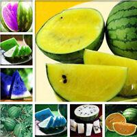 10 Seeds Watermelon Citrullus lanatus Fruit Plants Rare Kinds Edible Exotic