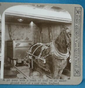 Scarce 1905 Stereoview Photo Industrial Social History Coal Mining Mine Pit Pony