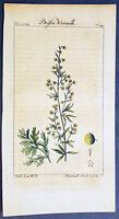 1774 Comte de Buffon Antique Botanical Print of Wormwood Bush, Leaves & Flowers