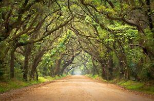 VLIES Fototapete-WALD-(4075V)-Bäume Allee Baum Weg Natur Landschaft Dschungel