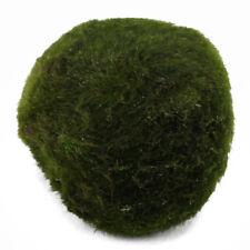 Green Large Moss Ball Cladophora Live Plant Home Fish Tank Aquarium Grass Decor
