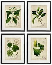 Vintage Botanical Floral No. 06 Art Home Wall Art Print Set of 4 Prints UNFRAMED