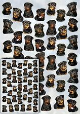 Rottweiler Dog Gift Wrapping Paper By Starprint