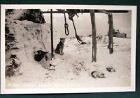 Husky Dogs beside Igloo in Alaska - vintage RPPC