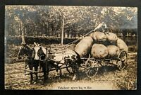 1909 Callao to Linn Missouri Over sized Potatoes Real Picture Postcard Cover