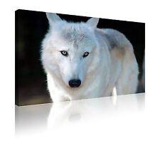 """Grande 20"""" X 30"""" White Wolf frente a cámara de LONA pared arte Foto Totalmente Gratis P&P"""