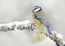 A4| Beautiful Blue Tit Poster Print Size A4 Bird Winter Snow Poster Gift #15663