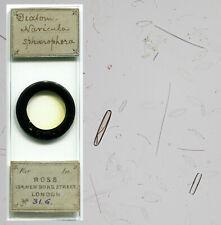 Ross Diatom Microscope Slide