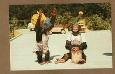 "Monkey Jungle,South of Miami,FL Florida, Chimpanzee Show doing ""INDIAN DANCE"""