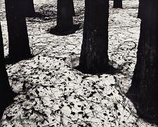 1950 Vintage BRETT WESTON Snow Pine Tree Forest Nature Landscape Photo Engraving