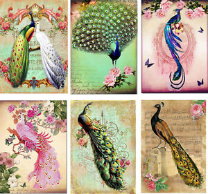 Vintage inspired peacock tag blank small card set of 6 with envelopes
