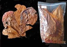 Amy's 75 grams Grade D+ INDIAN ALMOND CATAPPA / KETAPANG LEAVES -betta, discus