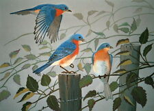 Doug Walpus Blue Bird Print 11 x 14 Open Edition Blue Birds on a fence post