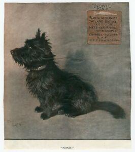 SCOTTISH  TERRIER WAR TIME MASCOT ORIGINAL 1920'S DOG ART PRINT by CECIL ALDIN