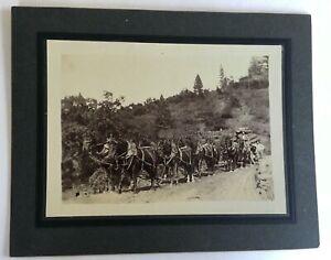 Antique Photo, 19th Century, Early California Logging, Team of 8 Horses