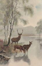 MEISSNER & BUCH: Deer near a lake - 1229