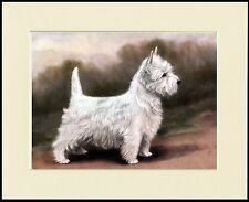 WESTIE WEST HIGHLAND WHITE TERRIER  LOVELY STANDING DOG PRINT READY TO FRAME