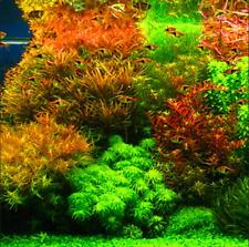 300 Pcs Seeds Aquarium Grass Bonsai Mix Water Aquatic Plants Garden Decorate New