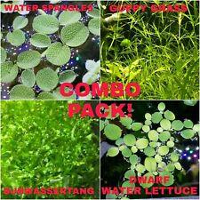 Subwassertang,Guppy Grass, Water Lettuce, Water Spangles, Amazon Frogbit + BONUS