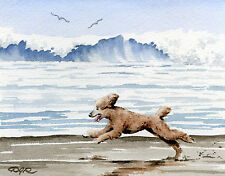 BROWN POODLE AT THE BEACH Dog Watercolor 8 x 10 ART Print Signed by Artist DJR