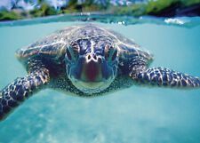 4 Greeting Cards Hawaiian Blank Hawaiian Sea Turtle (Honu) by Kirk Lee Aeder
