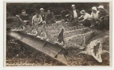 Panama, Bayano River Alligators Real Photo Postcard, B208