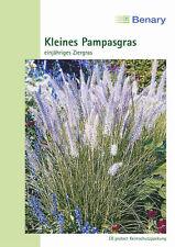 Federborstengras Kleines Pampasgras Pennisetum rueppelii einjährig ca. 70cm hoch