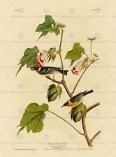 Oiseaux de l'amérique audubon bay sein warbler poster print BB12464A