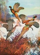 Ring-Necked Pheasants 1 by Lynn Bogue Hunt