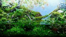 Musgo vivo verde natural plantas naturales acuario paludario vivario ranas peces