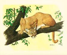 Cougar - Gene Gray Vintage Art Card - Old Stock