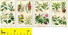 Miniature ' Medicinal Plants'   Prints   -  Dollhouse 1:12 scale