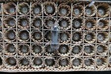 6S19P-V Audiophile Triode HI-durable TUBE NOS FACTORY BOX 50pcs Ulyanovsk USSR