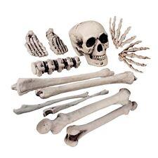 Boland 1.66 gr – Squelette Ensemble de 12 Os