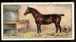 Tobacco Card, Edwards Ringer Bigg, OUR PETS, 1926, 2nd Series, Horse, #13