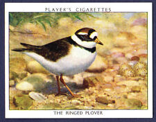 Player's WILD BIRDS (Large) - Ringed Plover, No.16