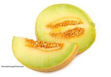 Honigmelone *Karamell* 10 Samen *Russische Sorte *Süß /& Aromatisch *Melon seeds