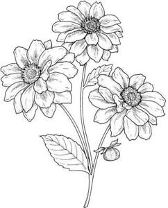Flower - Flowers - Spray #9 Unmounted Clear Stamp Approx 48x60mm