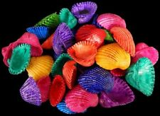 sea shell Dyed small white Arks  nice assorted colors craft lot of 20