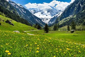 VLIES Fototapete-ALPEN-(1395V)-Felsen Gebirge Berge Wiese Feld Natur Landschaft