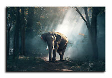 Large Wall Art Canvas Picture Print of Elephant In Forest  Framed