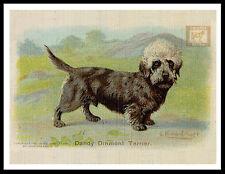 Dandie Dinmont Terrier Lovely Vintage Style Dog Advert Print Poster