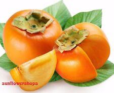 Persimmon Fruit Tree Seeds  Diospyros Kaki Sweet Fruit Garden Plant - 30 Seeds