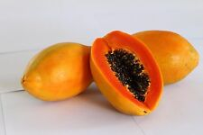"Liveseeds - World No1 Papaya"" Red Winner"" 20 Seeds"