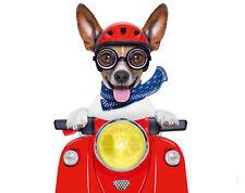 Tappetino per mouse dalla Edition COLIBRI: Jack Russel Terrier Chico come EASY RIDER-CICLOMOTORE
