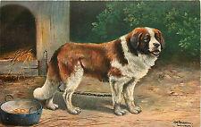 Schonian A/S St. Bernard Dog #537 Pre-07 P/C
