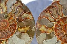 "1357 Cut Split PAIR Ammonite Deep Crystal Cavity 110myo Fossil 193mm XXXLG 7.9"""